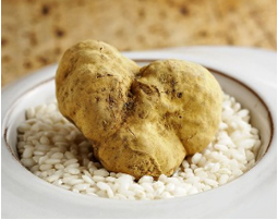 winter white truffles